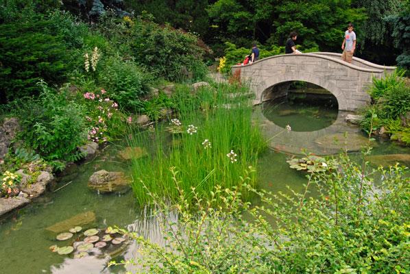 a stone bridge crosses the pond in the japanese garden - Japanese Garden Stone Bridge